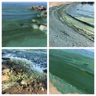 Collage of photos showing algae blooms on Lake Winnipeg