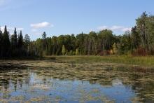 Water and trees at Beaver Creek in Manitoba.